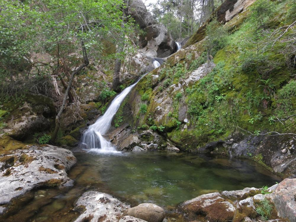 bracteata falls2